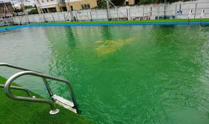 Trước xử lý nước bể bơi